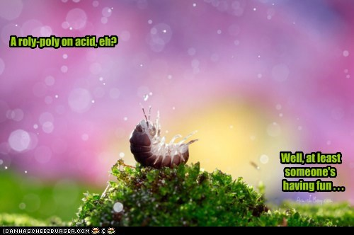 acid,bug,caption,captioned,colors,drugs,fun,insect,isopod,roly poly