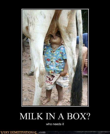 box cow hilarious milk wtf - 5655763968