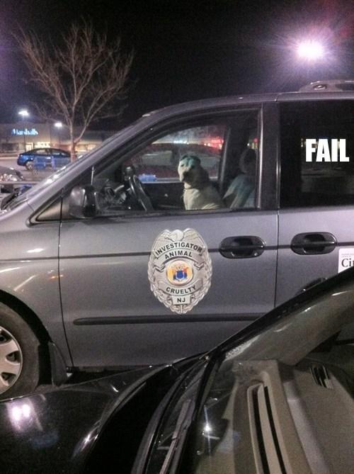 animals cars irony Professional At Work - 5655802112