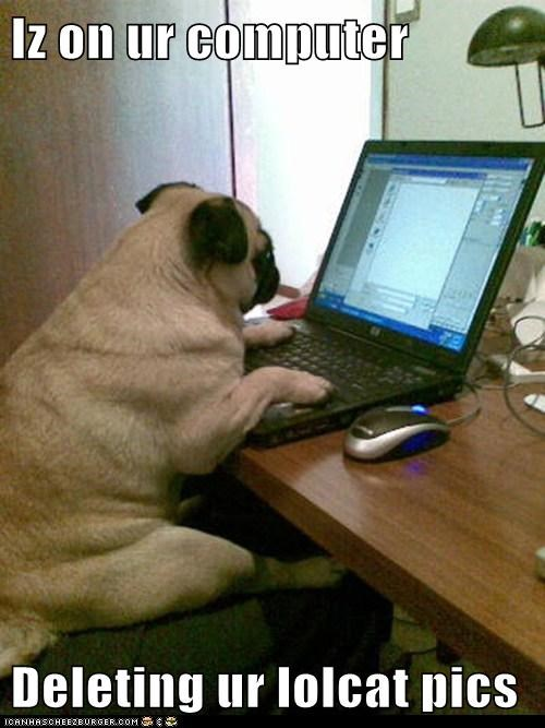 best of the week,computer,delete,Hall of Fame,laptop,lolcats,pug,technology