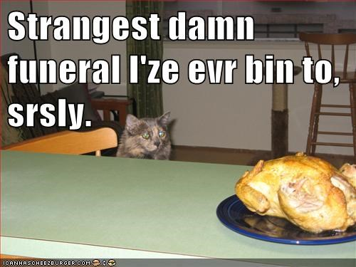 Cheezburger Image 5657364224