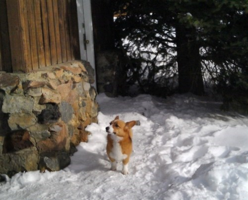 corgi Heartwarming Tearjerker Look At This Dog ole - 5657525760