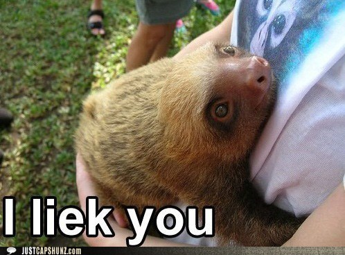 animals,awww,friends,hug,human,i like you,sloth
