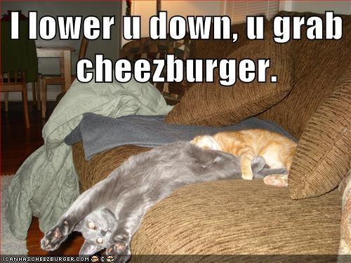 Cheezburger Image 5658625792