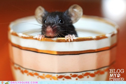 baby,cup,hiding,little,peeking,rat,tea,teacup,tiny