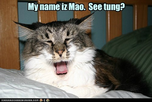 caption,captioned,cat,chairman mao,mao,pun,see,similar sounding,tongue,yawning