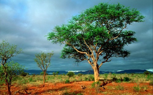 africa getaways kenya national park tsavo national park wallpaper wallpaper of the day - 5659187968