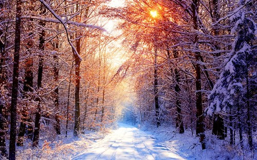 Forest,getaways,snow,sunlight,trees,unknown location,wallpaper,wallpaper of the day,white,winter
