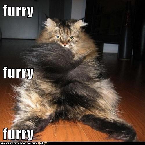furry furry furry