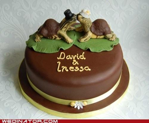 cake funny wedding photos turtles wedding cake - 5659445760