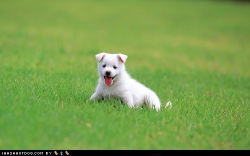 cyoot puppeh ob teh day grass outdoors play playing tongue tongue out whatbreed - 5659507968