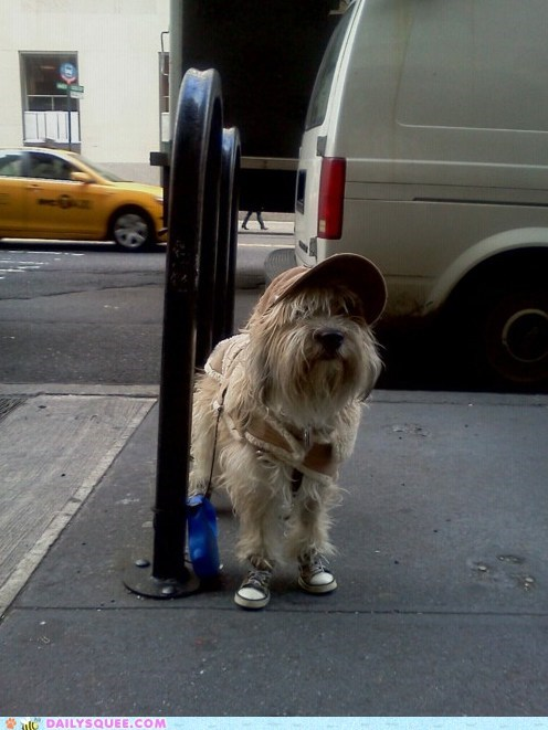 acting like animals argument chuck taylors converse dogs hat invalid shoes your argument is invalid - 5660209152
