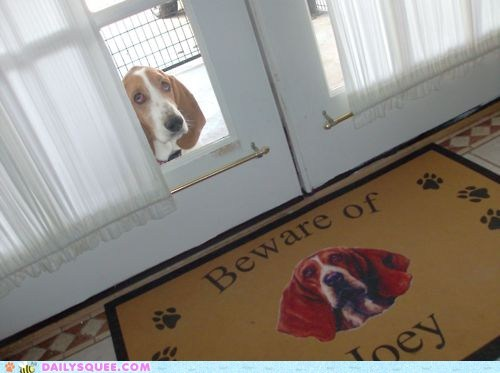 acting like animals adorable basset hound beware deceiving Hall of Fame harmless mat warning - 5660228352