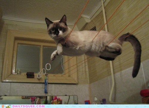 acting like animals balancing cat caught in the act Hall of Fame iron man quote tony stark wires - 5660239872