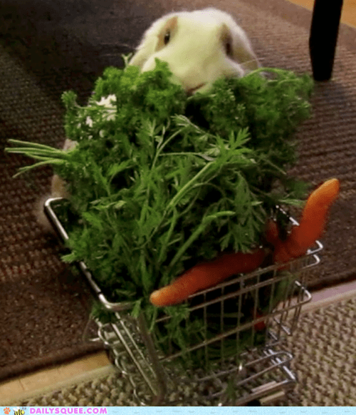 acting like animals,bunny,carrot,carrots,cart,groceries,Hall of Fame,happy bunday,rabbit,shopping,store