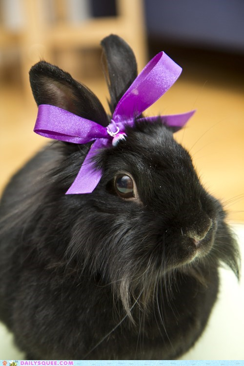 bow bunny fact feeling Hall of Fame happy bunday pretty rabbit - 5660330496