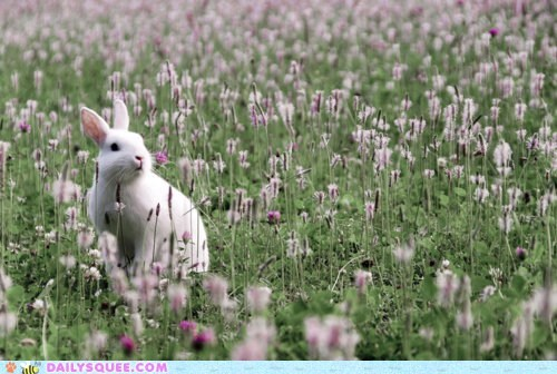 bunny field Flower flowers happy bunday Movie picturesque rabbit scene standing - 5660347136