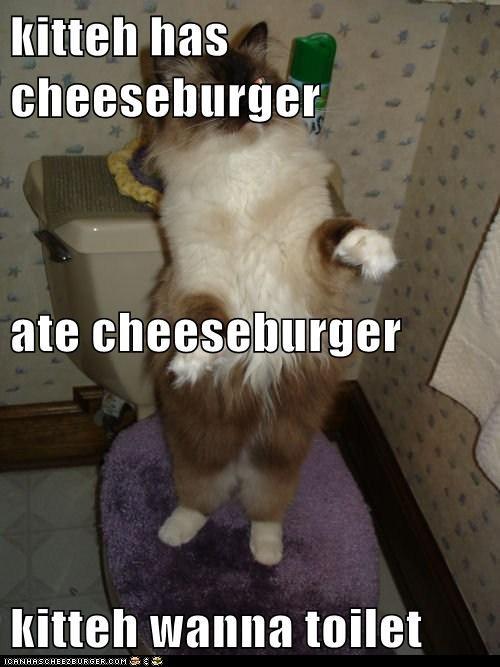 Cheezburger Image 5660347904