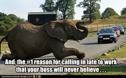 best of the week,boss,elephant,elephant in the road,Hall of Fame,job,late for work,work