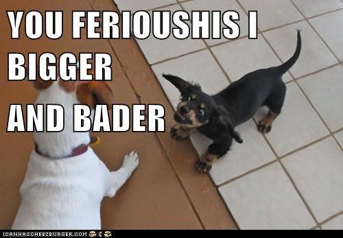 Cheezburger Image 5660555264