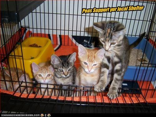 Cheezburger Image 5661085952