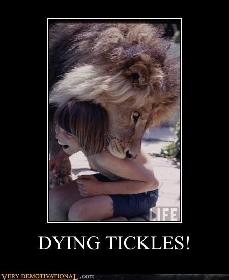 dying,eating,hilarious,kid,lion,tickles