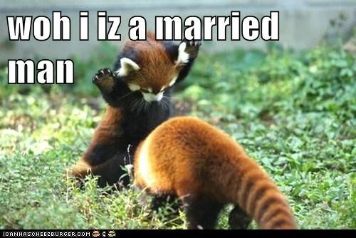 animals back away married married man not interested red panda - 5661617664