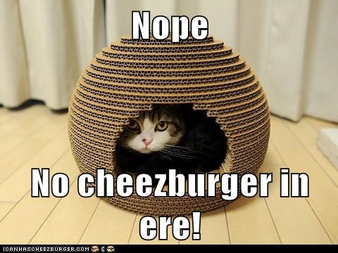 Cheezburger Image 5661624832