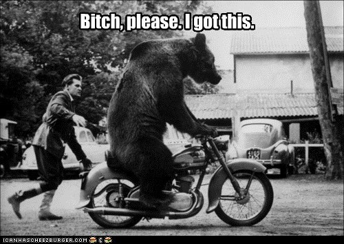 animals,bear,bear riding a motorcycle,bitch please,i got this,motorcycle
