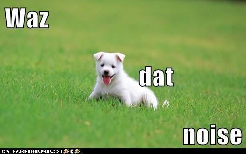 Waz dat noise - I Has A Hotdog - Dog Pictures - Funny