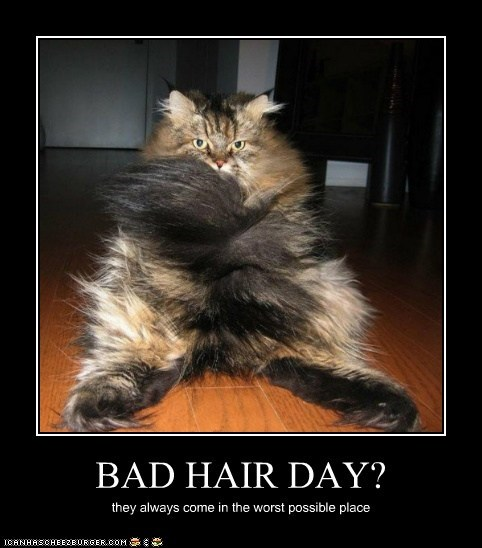 BAD HAIR DAY? they always come in the worst possible place