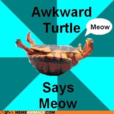 """Awkward Turtle Says """"Meow"""""""