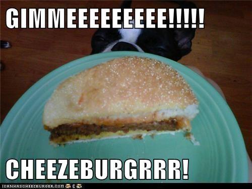 Cheezburger Image 5662208512