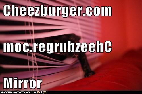 Cheezburger Image 5662256896