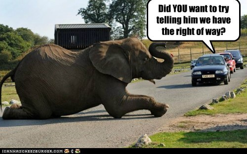 animals drivers elephant right of way road - 5662969856