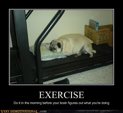 dogs excercise hilarious pug treadmill