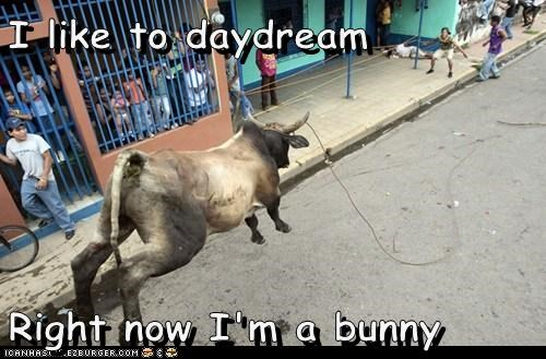 animals,bull,bunny,daydream,daydreaming,hopping