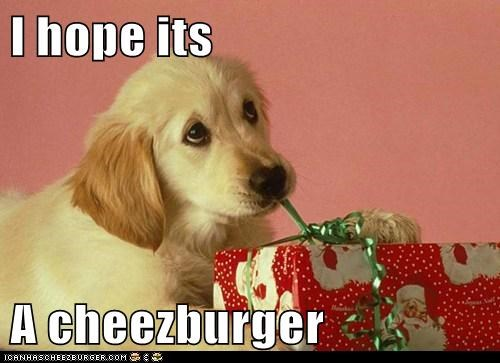 Cheezburger Image 5663418624