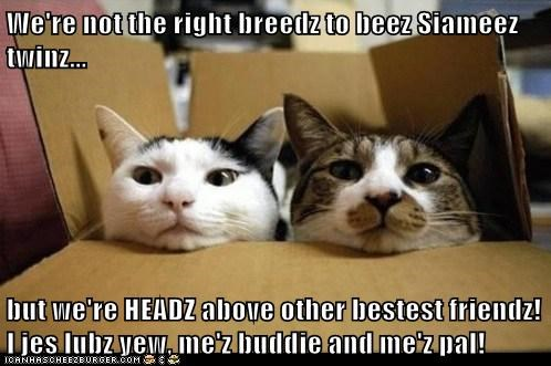 We're not the right breedz to beez Siameez twinz...  but we're HEADZ above other bestest friendz! I jes lubz yew, me'z buddie and me'z pal!