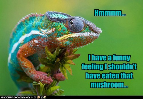 animals chameleon colorful drugs high mushroom reptile
