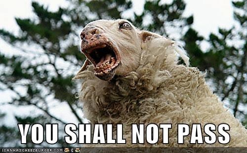 best of week,derp,sheep,territorial,you shall not pass