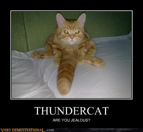 cat hilarious huge no no tubes tail wtf - 5666145792