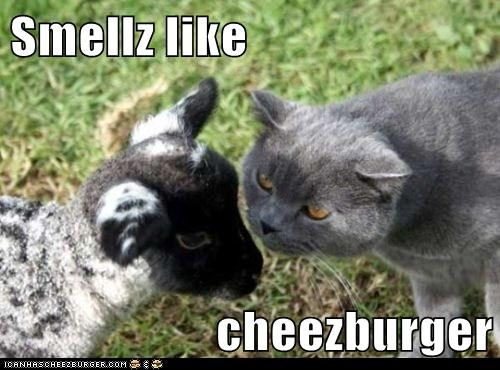 Cheezburger Image 5666185984
