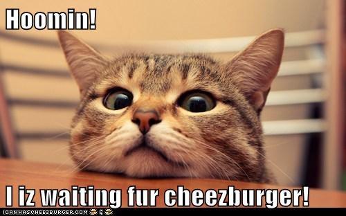 Cheezburger Image 5666224128
