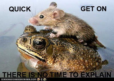 animals,frog,mouse,no time to explain,wtf
