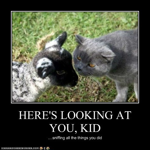 HERE'S LOOKING AT YOU, KID ....sniffing all the things you did