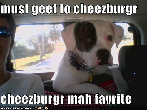 Cheezburger Image 566703872