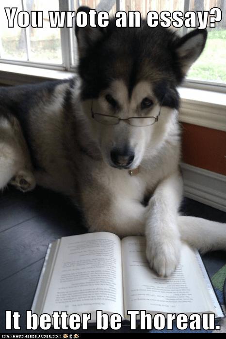 Condescending Literary Pun Dog dogs essay henry david thoreau puns thorough - 5667512320