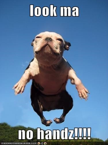 animals awesome dogs flying french bulldogs i has a hotdog look mom no hands - 5667696384