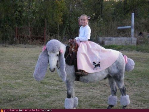 best of week,horse,humiliation,poodle skirt,wtf